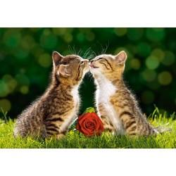 Koťata s růží